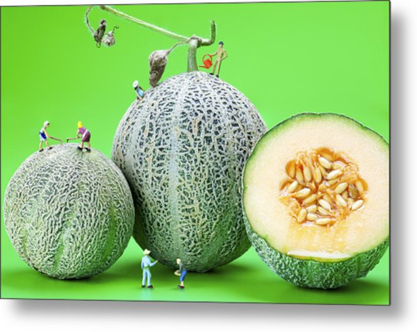 Planting Cantaloupe Melons Little People On Food Metal Print