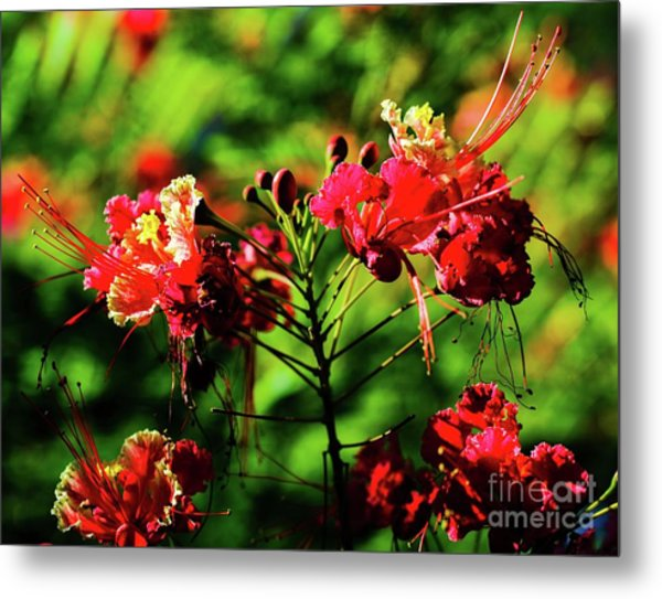Plants And Flowers In Hawaii Metal Print by D Davila