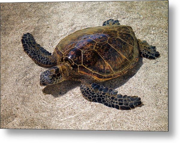 Playful Honu Metal Print