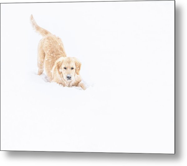 Playful Puppy In So Much Snow Metal Print
