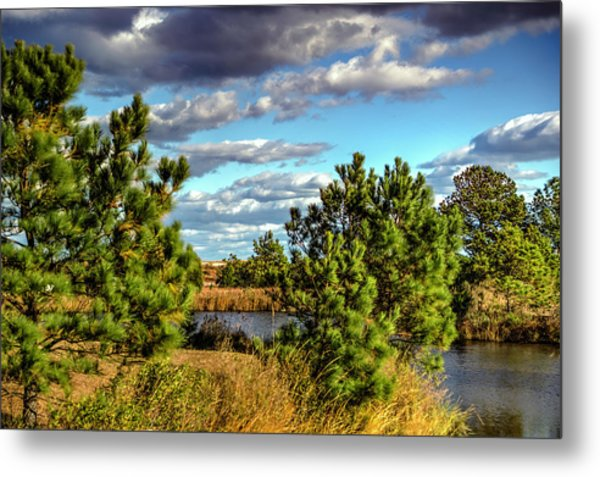 Pleasure House Point Natural Area  Metal Print