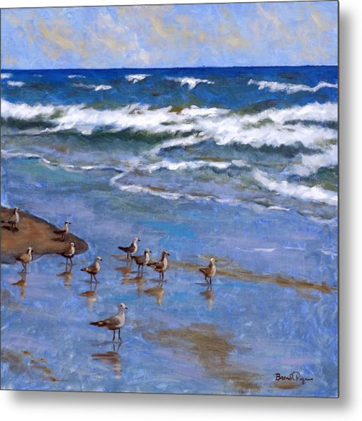 Plover Dance Metal Print by Brenda Williams