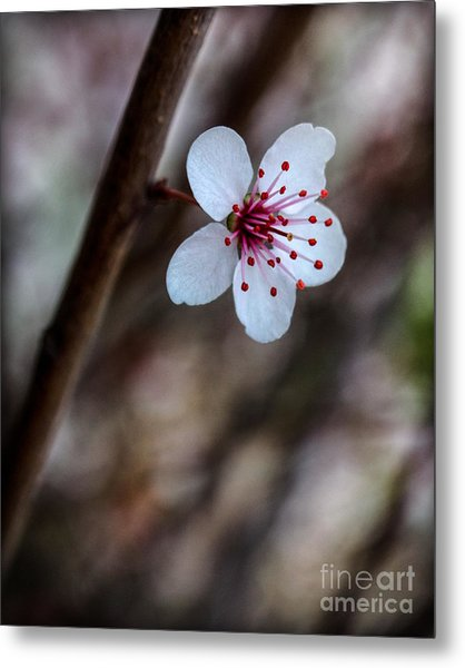Plum Flower Metal Print