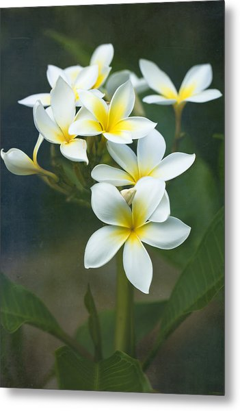 Plumerias On A Cloudy Day Metal Print
