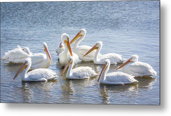 Pod Of Pelicans I Metal Print