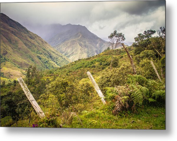 Podocarpus National Park Metal Print
