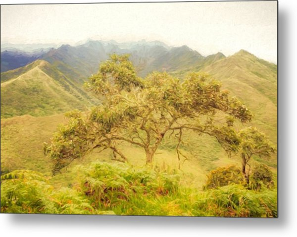 Podocarpus Tree Metal Print
