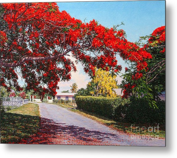 Poinciana Shadows Metal Print