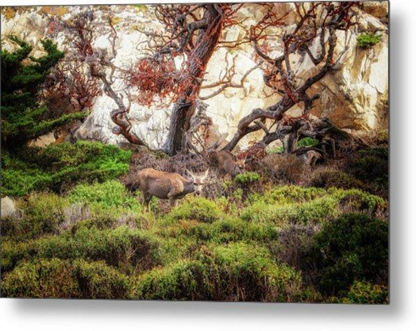 Point Lobos - Eden Metal Print