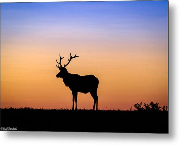 Point Reyes Elk Metal Print