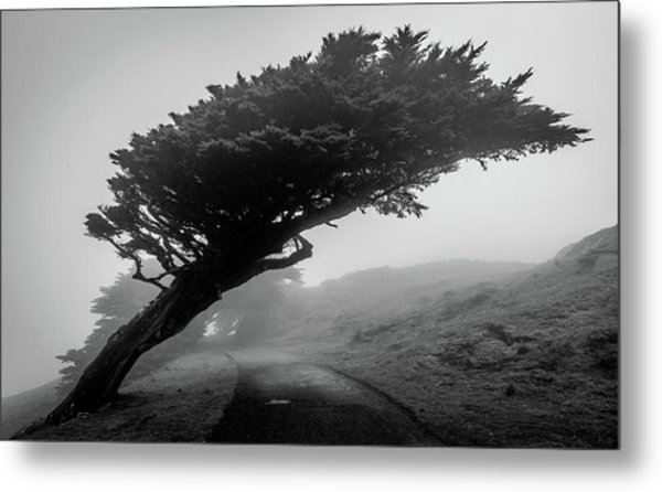 Point Reyes Fog Black And White Metal Print