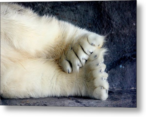 Polar Bear Paws Metal Print