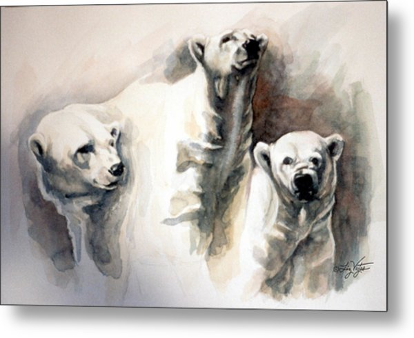 Polar Bear Study Metal Print