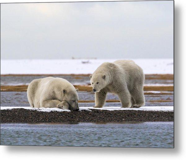 Polar Bear Zzzzzzz's Metal Print