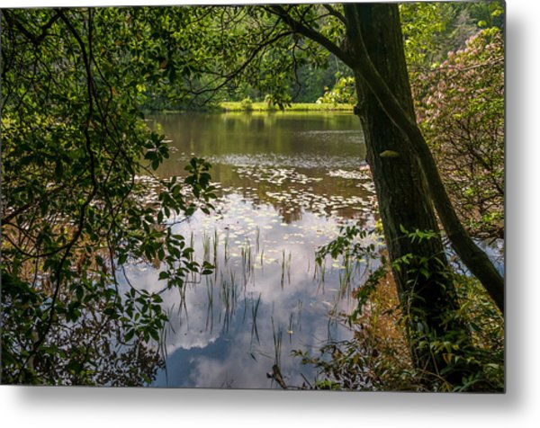 Pond In Spring Metal Print