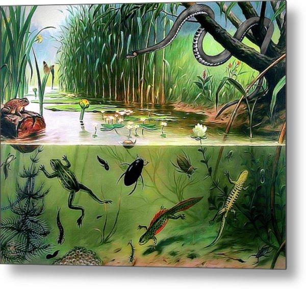 Pond Life Metal Print