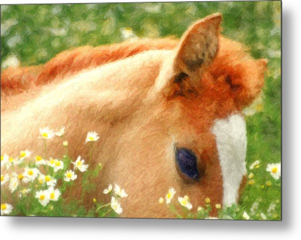 Pony In The Poppies Metal Print
