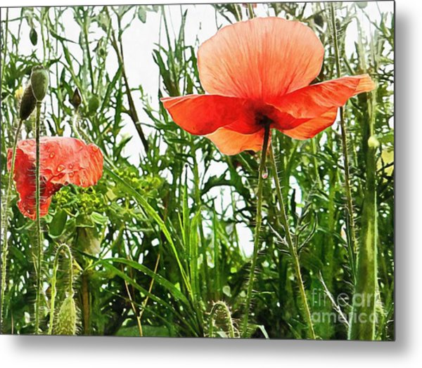 Poppies After The Rain Photograph By Dorothy Berry Lound