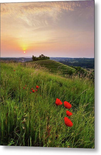 Poppies Burns Metal Print