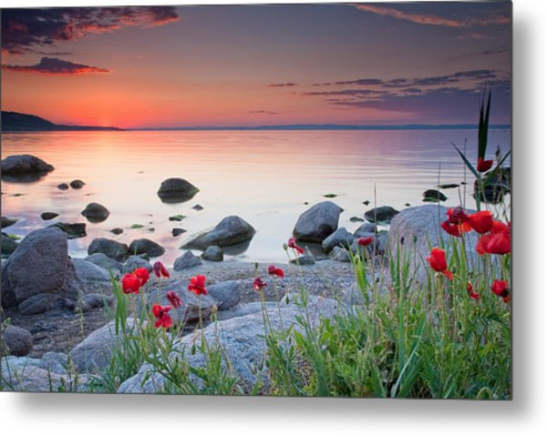 Poppies By The Sea Metal Print