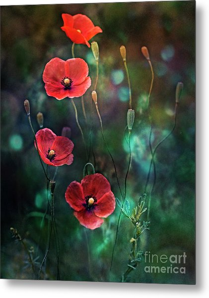 Poppies Fairytale Metal Print