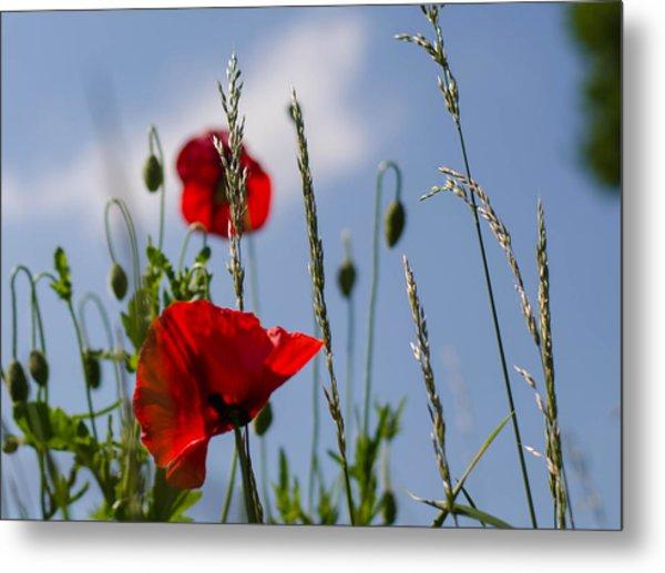 Poppies In The Skies Metal Print