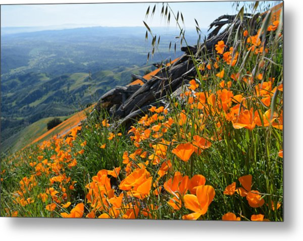 Poppy Mountain  Metal Print