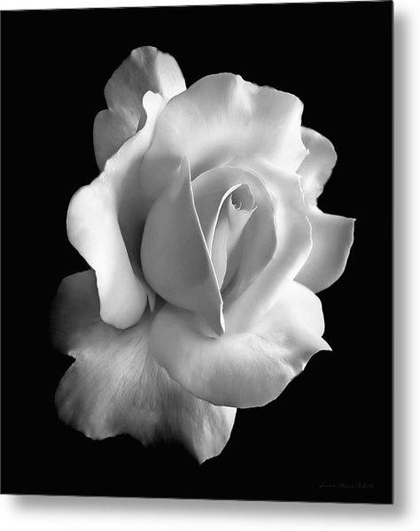 Porcelain Rose Flower Black And White Metal Print