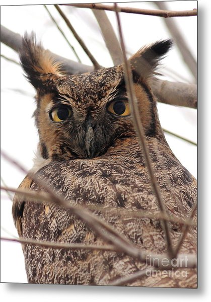 Portrait Of A Great Horned Owl Metal Print by Wingsdomain Art and Photography
