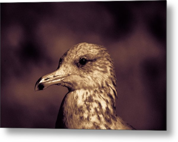 Portrait Of A Gull Metal Print