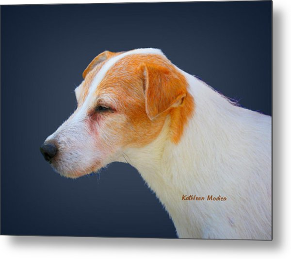 Portrait Of A Jack Russel Metal Print