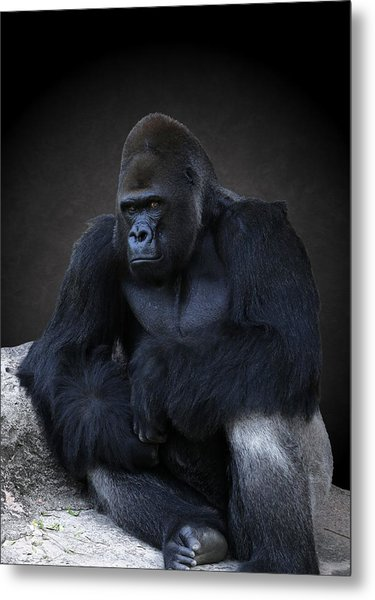 Portrait Of A Male Gorilla Metal Print