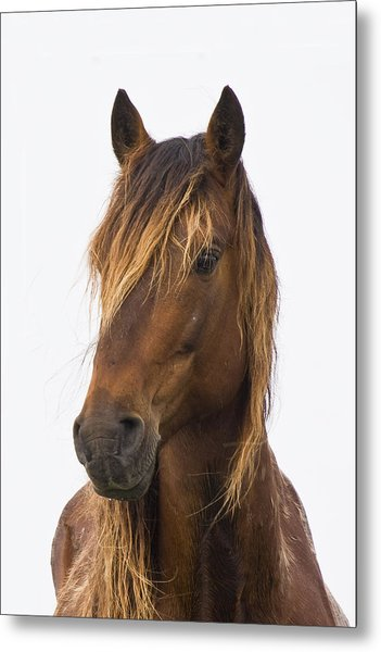 Portrait Of A Mustang Metal Print