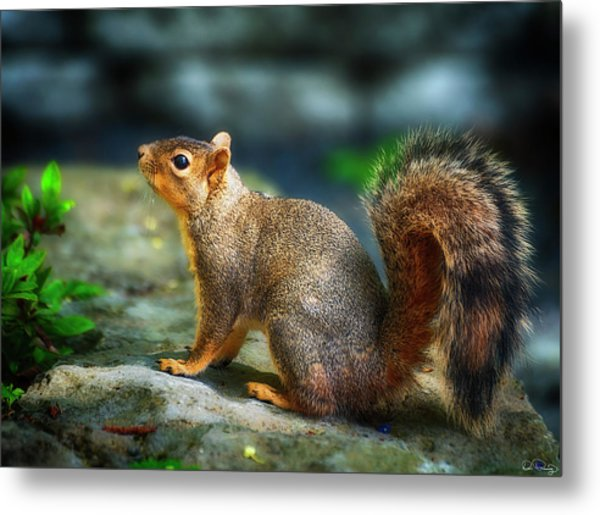 Portrait Of A Squirrell Metal Print