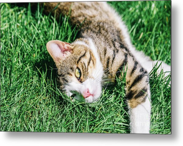 Portrait Of Cute Domestic Tabby Cat Playing In Grass Metal Print