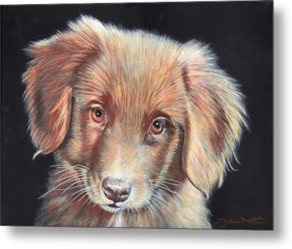 Portrait Of Toby Metal Print