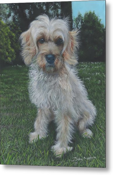 Metal Print featuring the painting Portrait Of Toffee by John Neeve