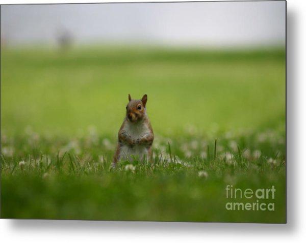 Posing Squirrel Metal Print