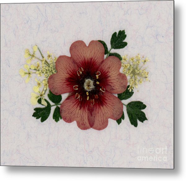 Potentilla And Queen-ann's-lace Pressed Flower Arrangement Metal Print
