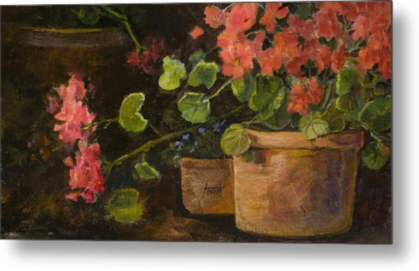 Pots Of Geraniums Metal Print by Jimmie Trotter