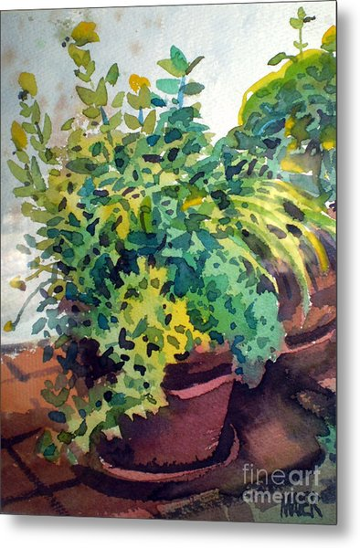 Potted Herbs Metal Print by Donald Maier
