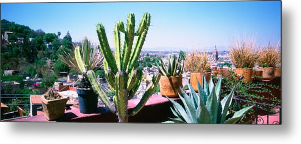Potted Plants On Terrace Of A Building Metal Print