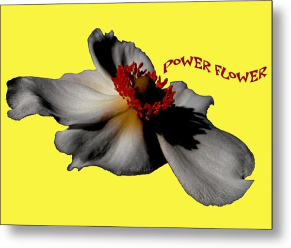 Power Flower Anemone Metal Print