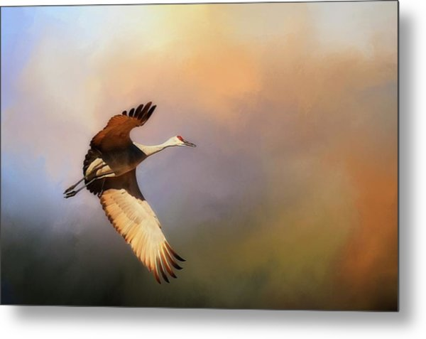 Power Stroke, Sandhill Crane, Bosque Del Apache, New Mexico Metal Print