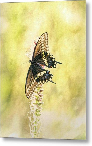 Prairie Butterfly 2 Metal Print