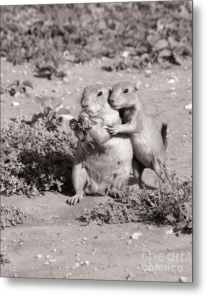Prairie Love Metal Print