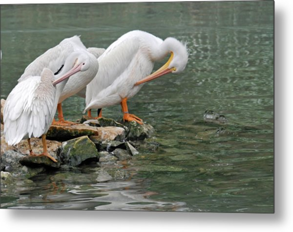 Prayer Of The Pelicans Metal Print by Teresa Blanton