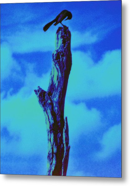 Praying Black Bird Grace In Nature Metal Print