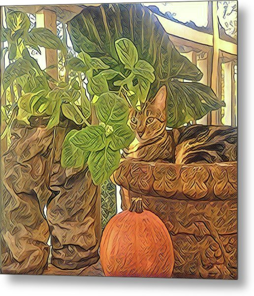 Precious Pumpkin Metal Print