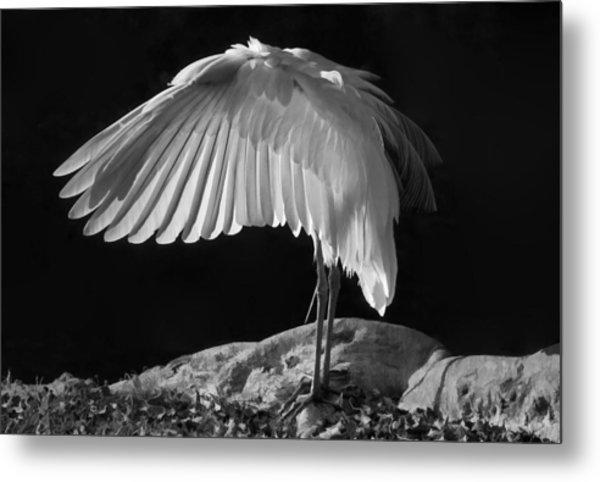 Preening Great Egret By H H Photography Of Florida Metal Print
